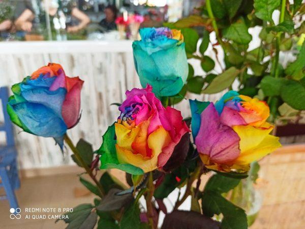 rosas de colores salobreña